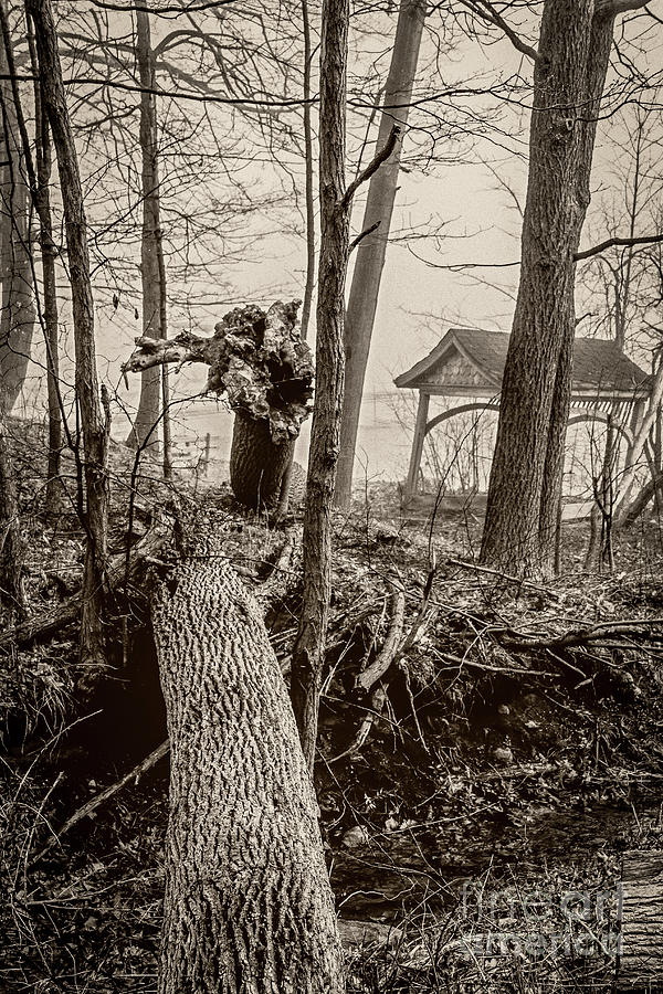 The Fallen by William Norton
