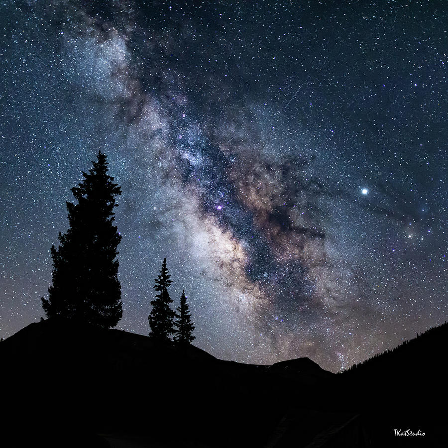 3 Trees on a Starlit Night by Tim Kathka