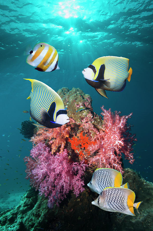 Tropical Coral Reef Fish Photograph by Georgette Douwma