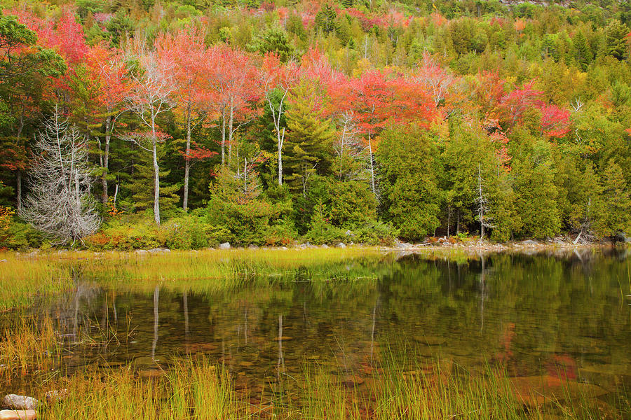 Agua Photograph - Usa, Acadia National Park, Maine 3 by Joanne Wells
