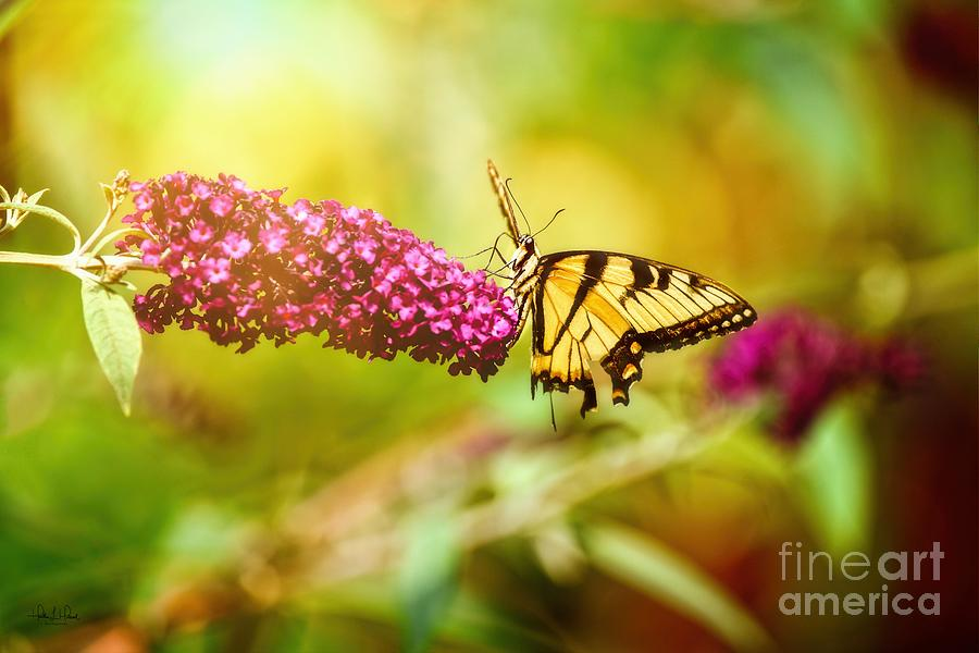 Yellow Swallowtail Photograph by Heather Hubbard