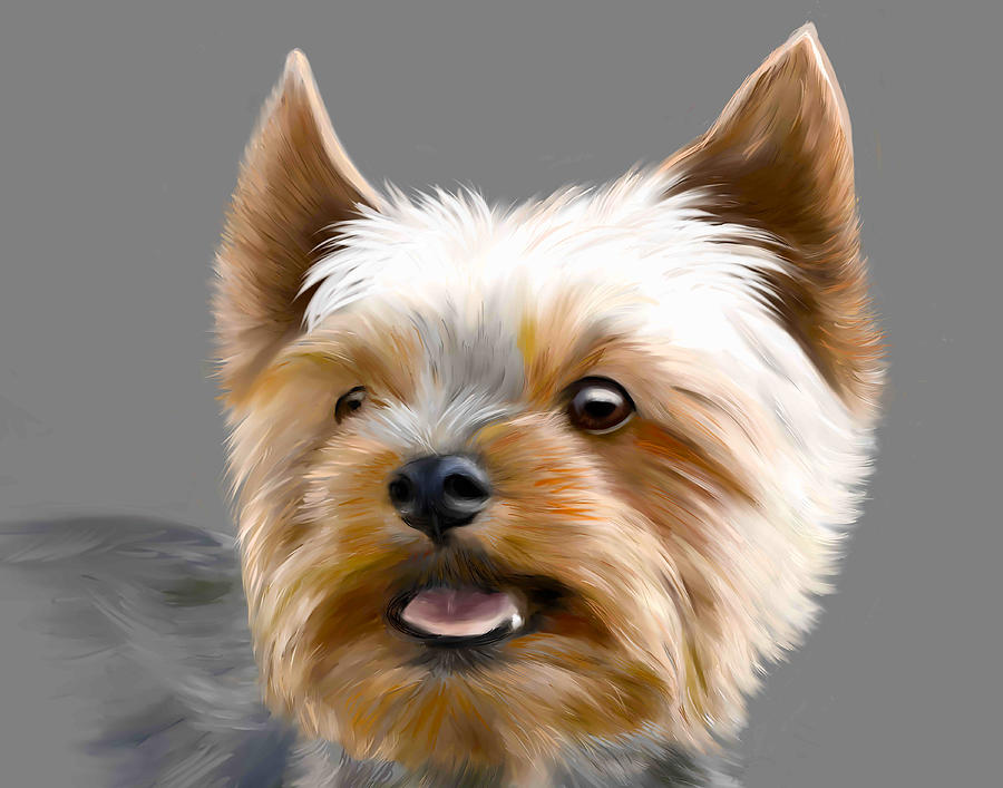 Yorkshire Terrier by Dave Byrne