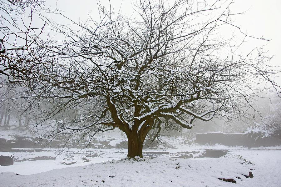 30/01/19  RIVINGTON.  Japanese Pool. Snow Clad Tree. by Lachlan Main