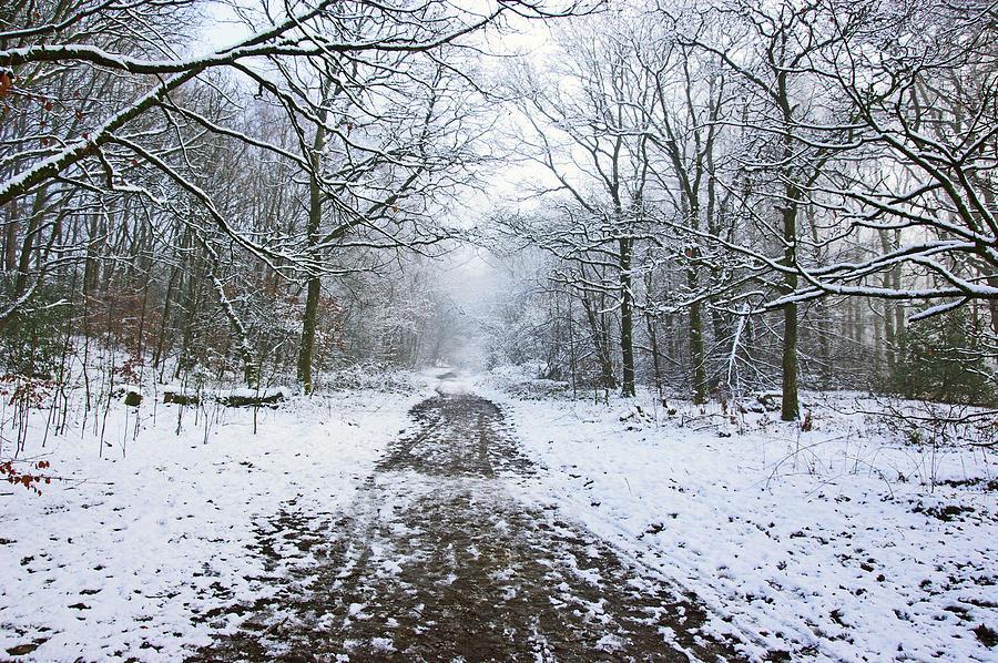 30/01/19  RIVINGTON. Lower Barn. Arboretum Path. by Lachlan Main
