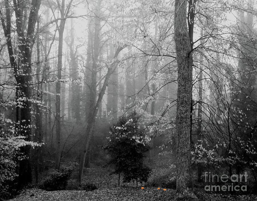 323 Whitby Woods  by Lizi Beard-Ward