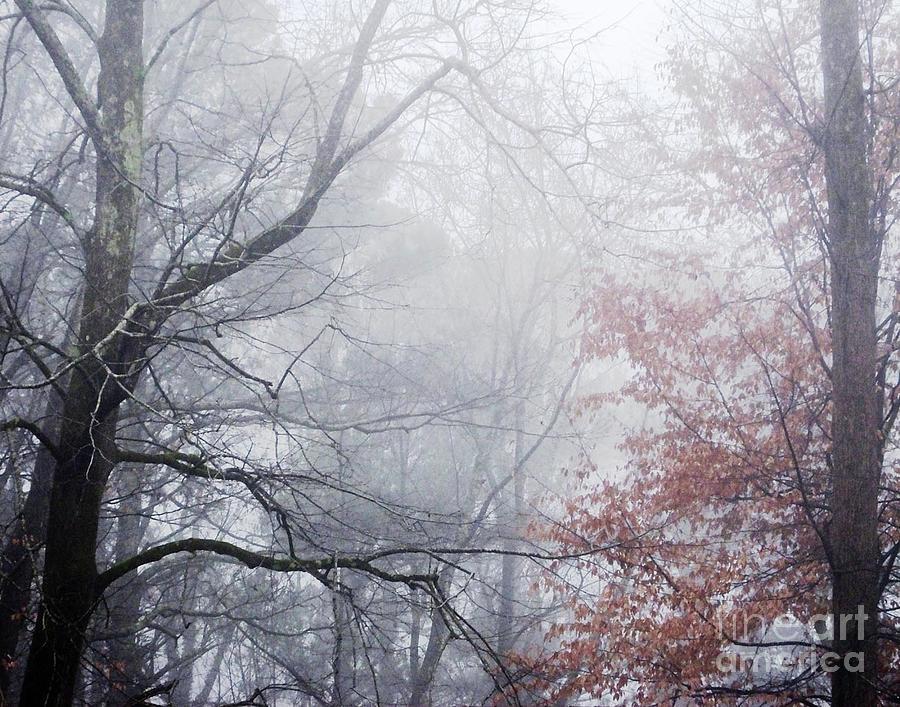325 Whitby Forest by Lizi Beard-Ward