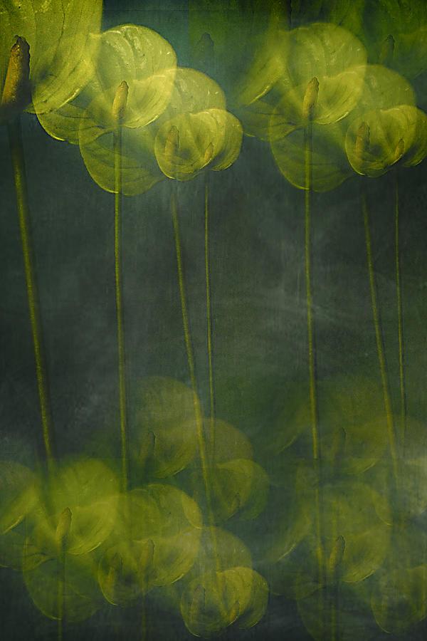 Creative Edit Photograph -  by Elena Arjona