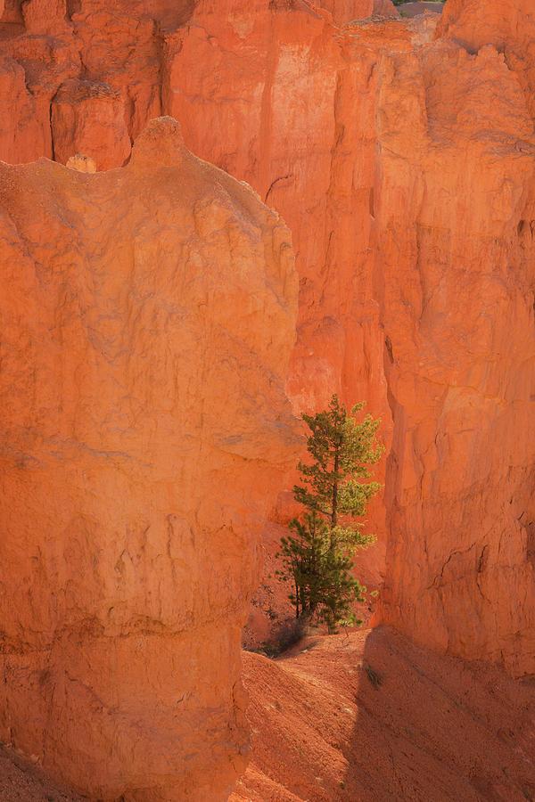 Bryce Canyon Photograph - Usa, Utah, Bryce Canyon National Park by Jaynes Gallery