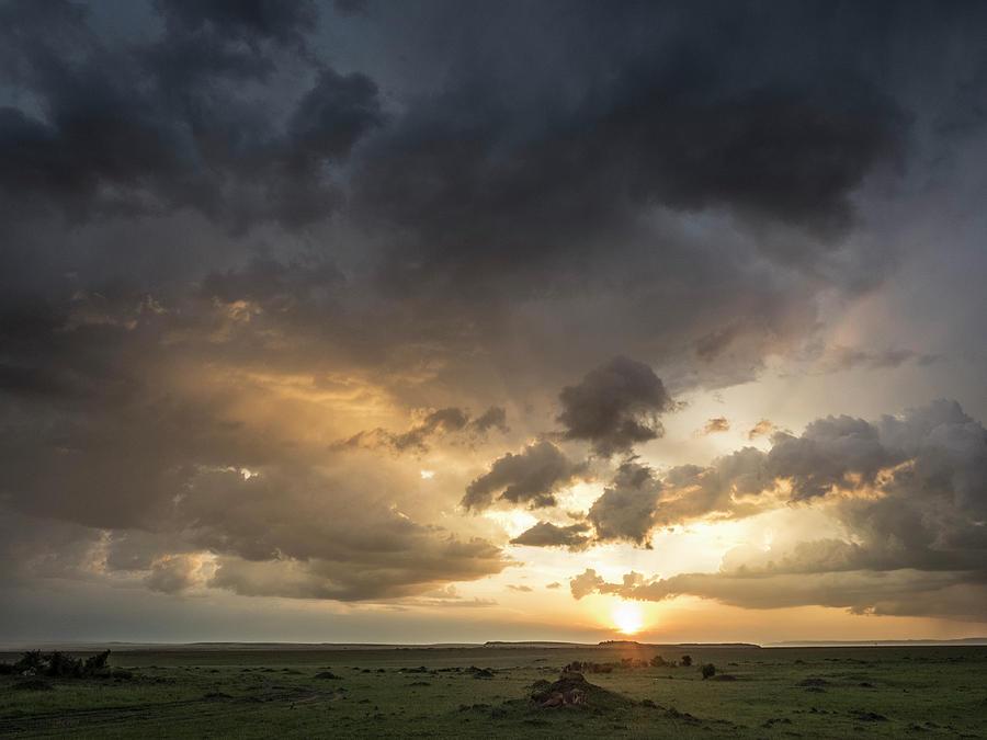 Africa, Kenya, Maasai Mara National by Jaynes Gallery