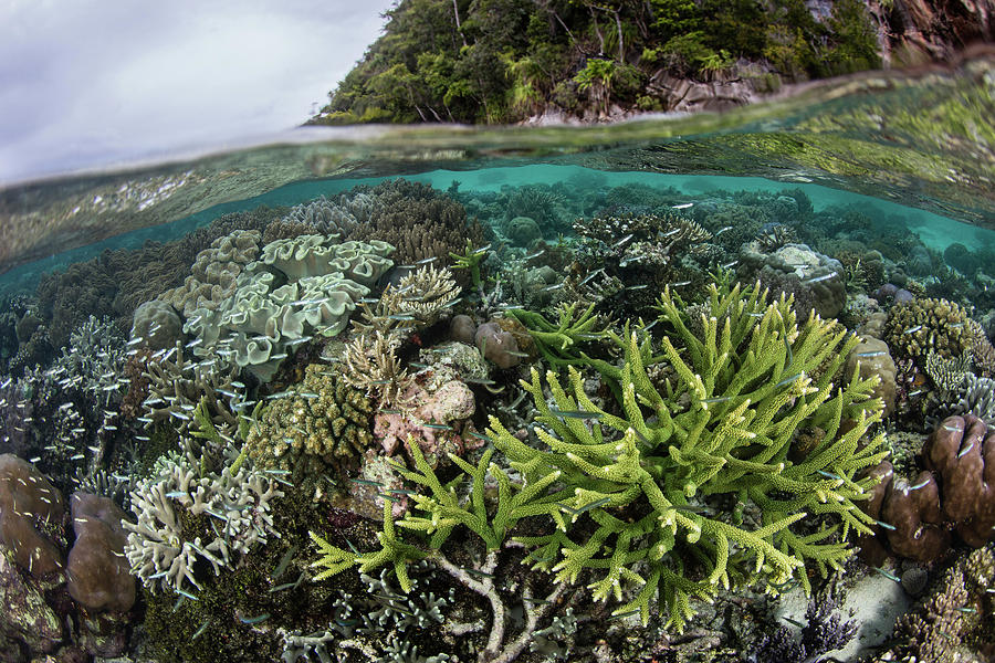 A Healthy And Beautiful Coral Reef by Ethan Daniels