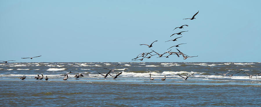 abstract pelicans in flight at the beach of atlantic ocean by ALEX GRICHENKO