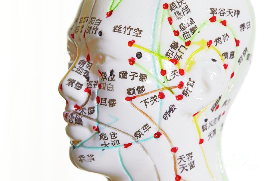 White Background Photograph - Acupuncture Model by Science Photo Library