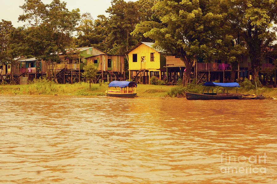 Banks of the Amazon by Cassandra Buckley