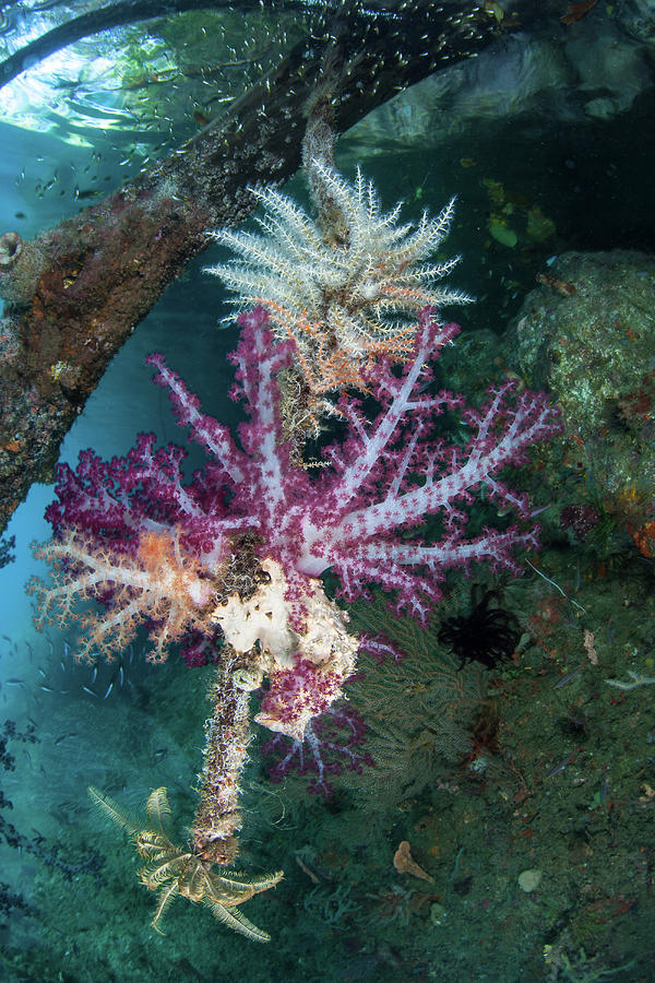 Brightly Colored Soft Corals Adorn by Ethan Daniels