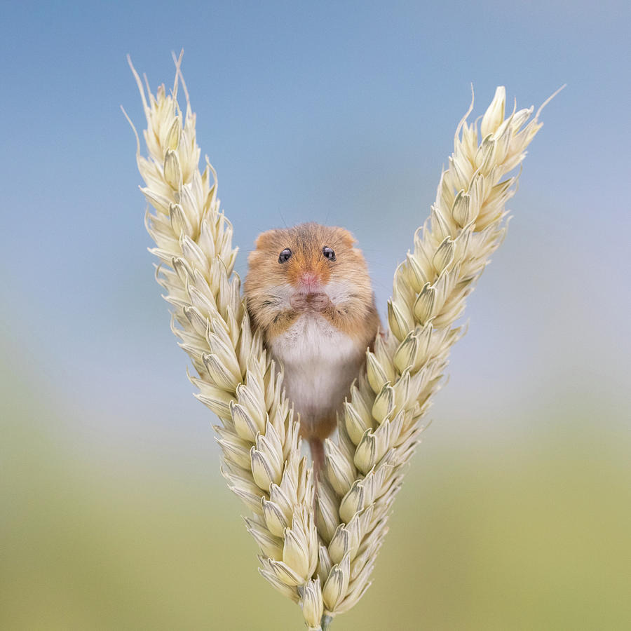 4 grams of Cuteness by Erika Valkovicova