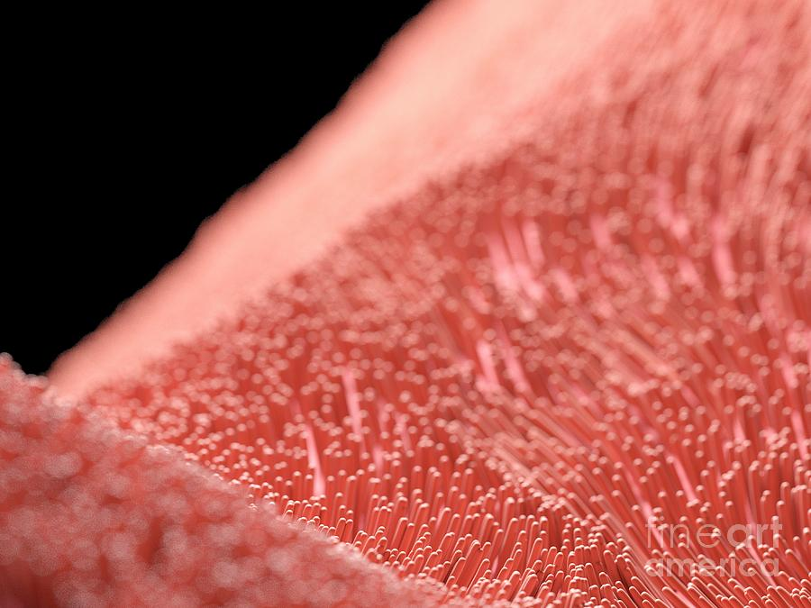 Cilia Photograph - Illustration Of Human Cilia 4 by Sebastian Kaulitzki/science Photo Library