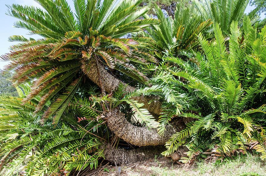 Kirstenbosch National Botanical Garden by Rob Huntley