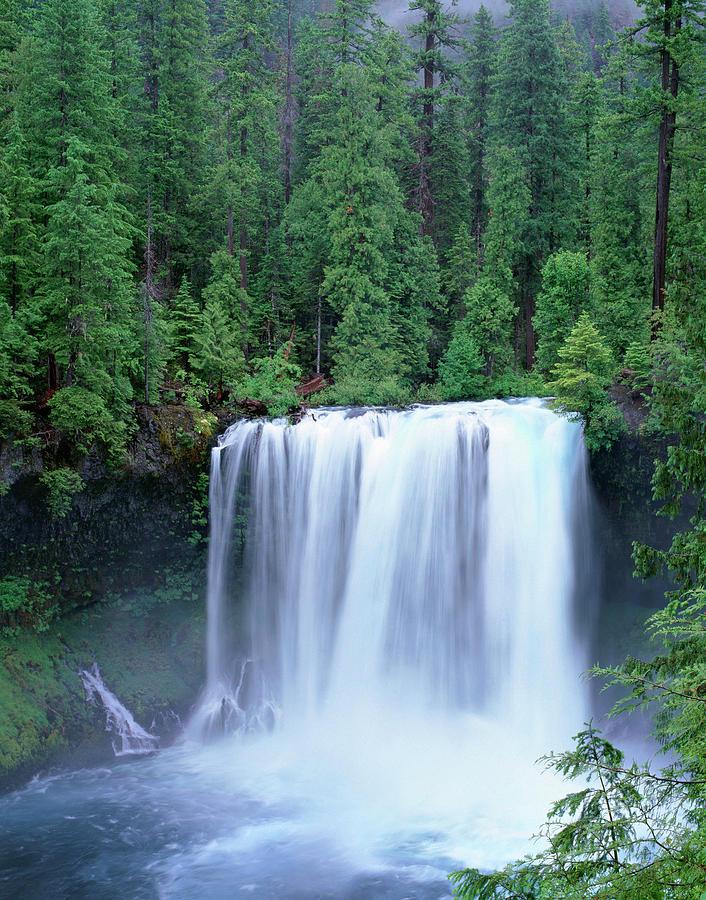 Alder Photograph - Oregon Willamette National Forest by John Barger