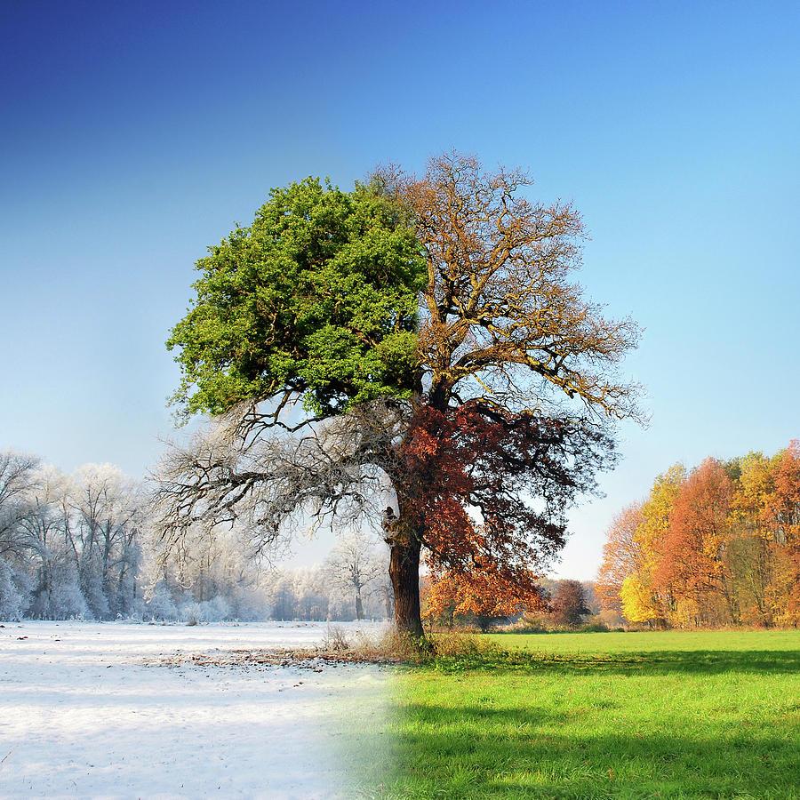 Season Photograph - 4 Seasons by Adam Brzuszek