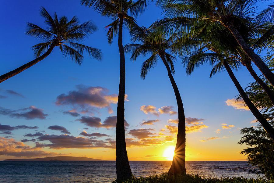 The Sun Setting Through Silhouetted by Jenna Szerlag