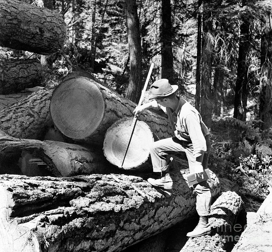 U.s. Forest Service Photograph by Bettmann