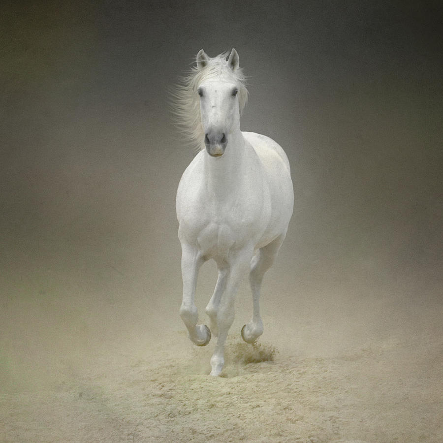 White Horse Galloping Photograph by Christiana Stawski