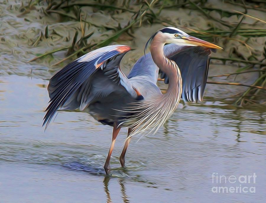 Great Blue Heron by Paulette Thomas