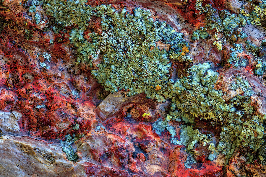 Abstract Photograph - Large, Naturally Polished Rock by Stuart Westmorland
