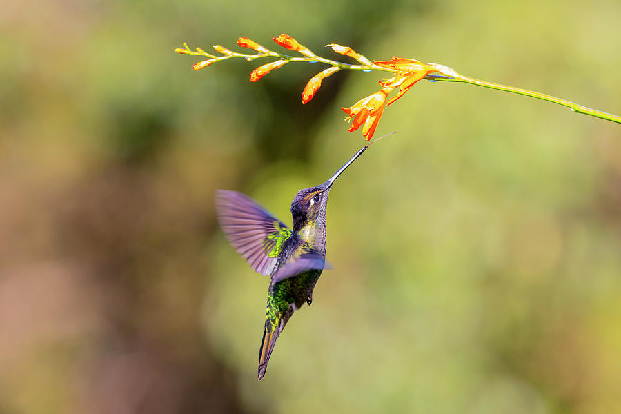 Close-up Photograph - Central America, Costa Rica by Jaynes Gallery