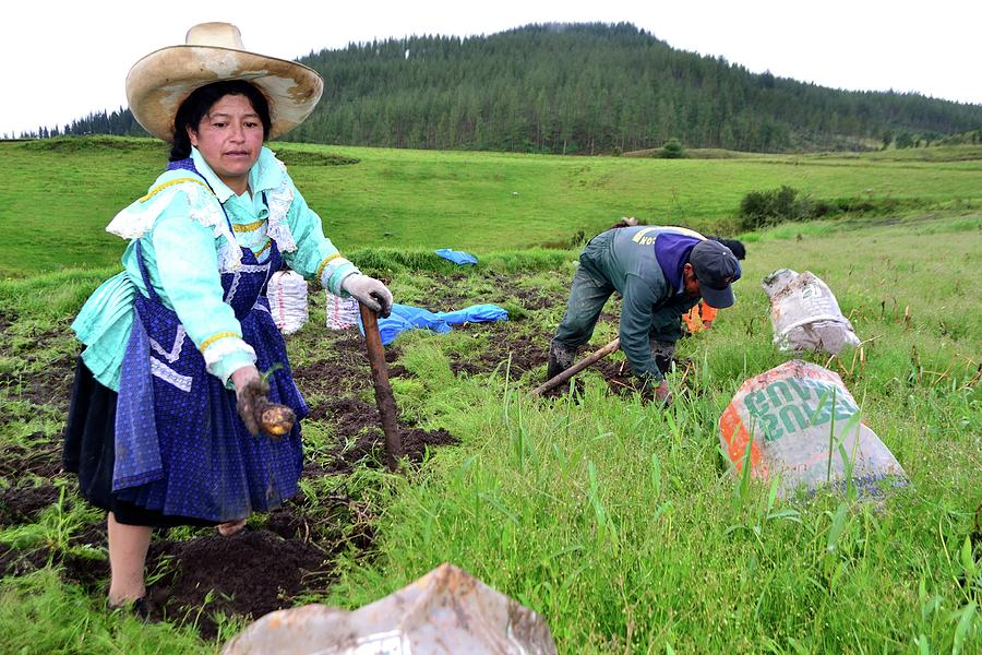 Field Photograph - Cajamarca - Peru by Carlos Mora