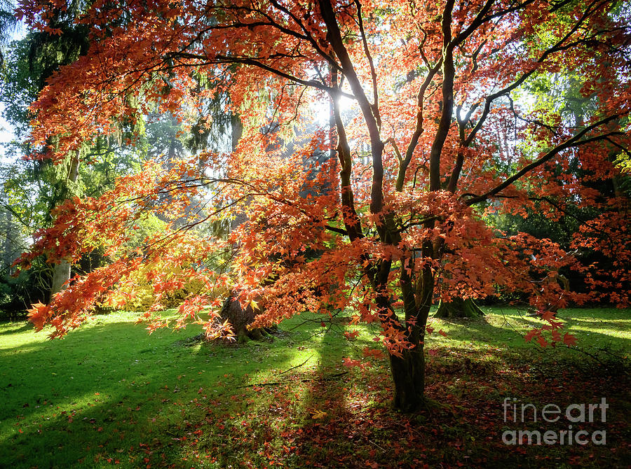 Autumn colours by Colin Rayner
