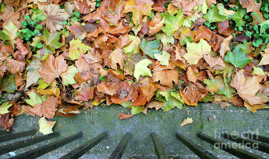 Abstract Photograph - Autumn Leaves Background by Tom Gowanlock