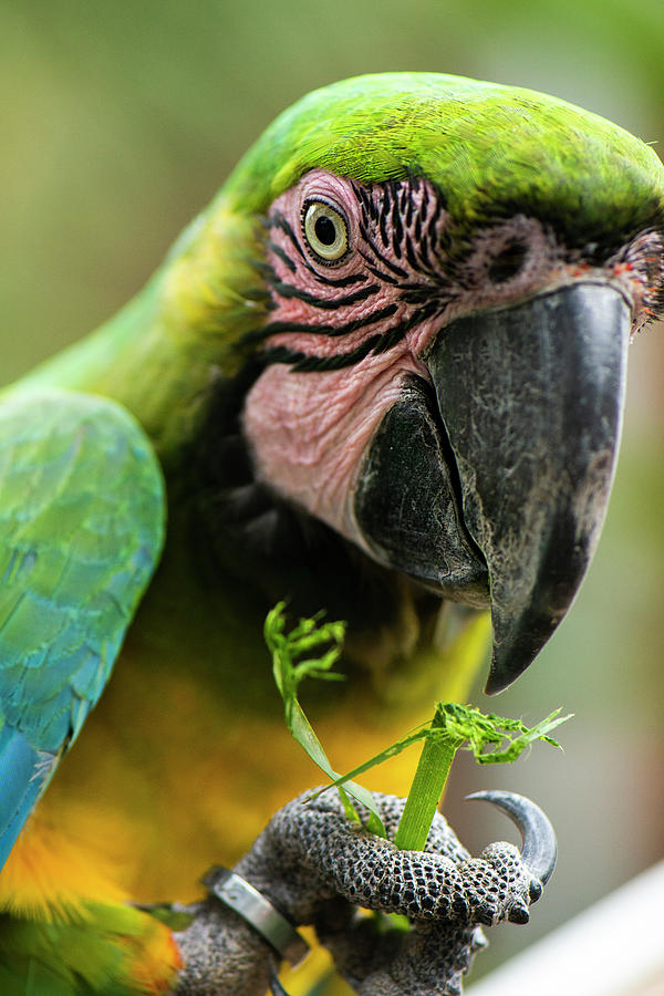 Beautiful Macaw bird by Rob D Imagery