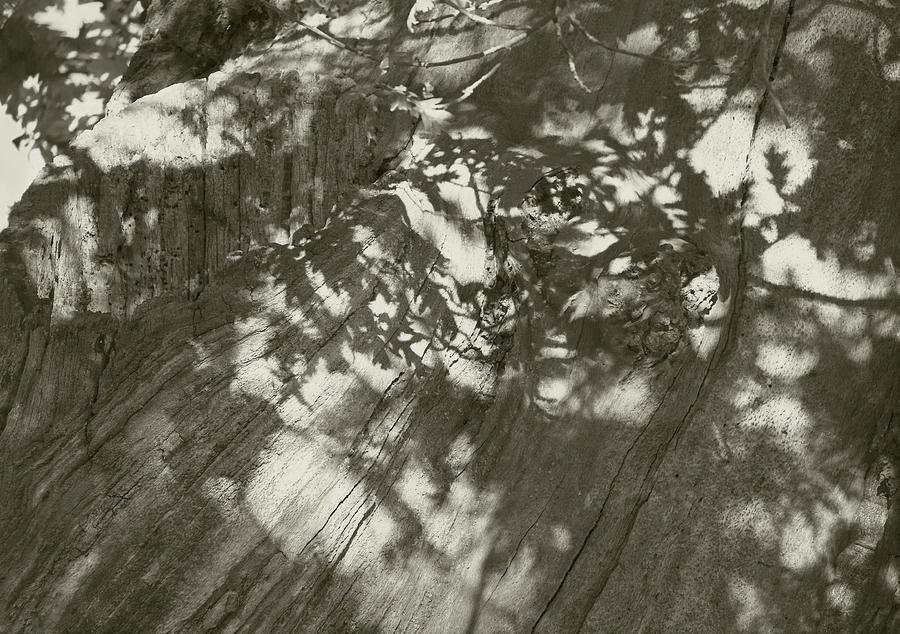 Bradgate Oak by Jerry Daniel
