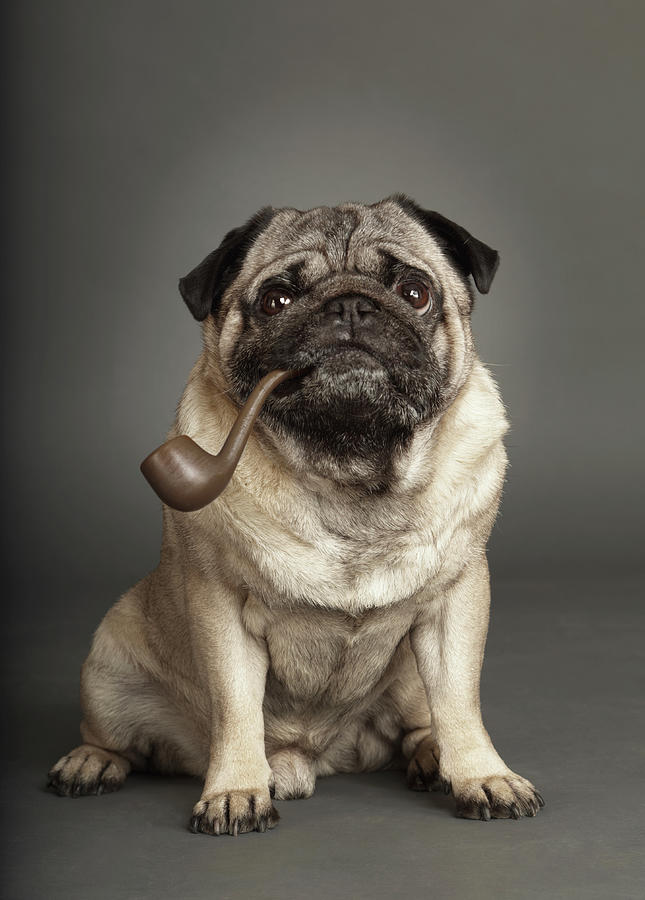 Dogs Photograph by Rainer Elstermann