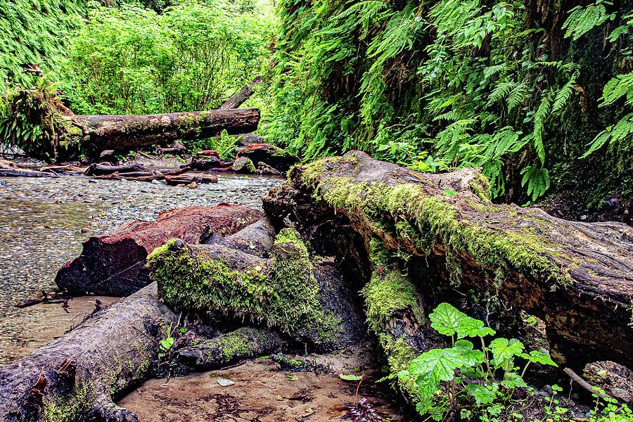 5 Fern Grove, Redwoods N. California by Phyllis Spoor