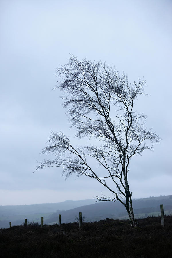 Landscape Photograph - Moody Winter Landscape Image Of Skeletal Trees In Peak District  by Matthew Gibson