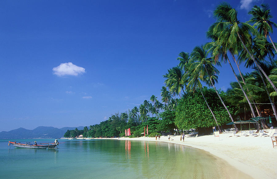 Palm Trees At Sandy Chaweng Beach Photograph by Otto Stadler
