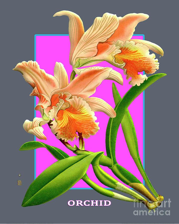 Vintage Orchid Exotic Flower Plant Orchideae Plantae Digital Art