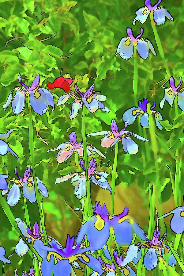 5 White Irises Abstract by Linda Brody