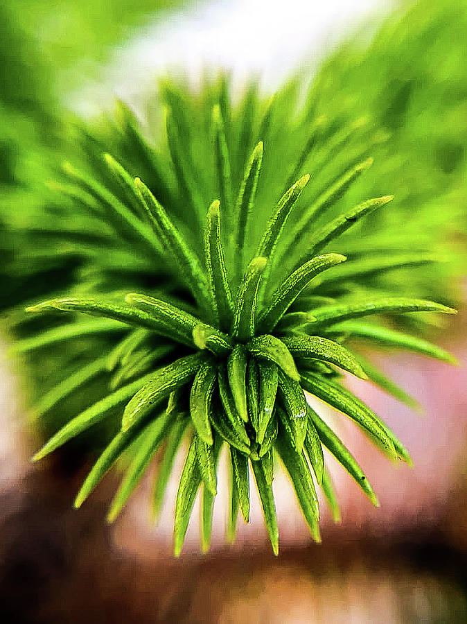 Green Spines Photograph