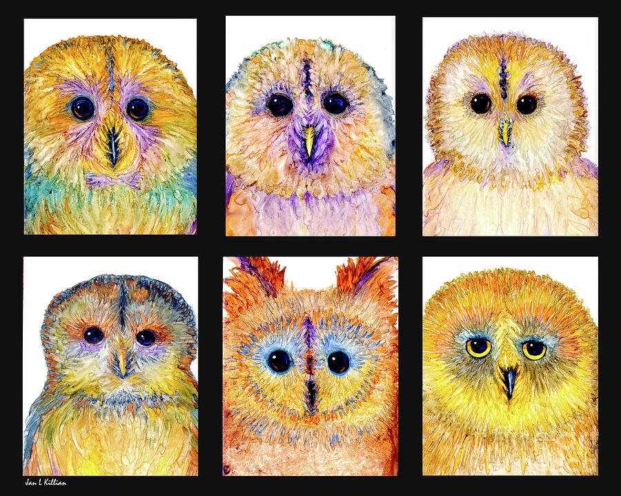 6 Silly Owls by Jan Killian