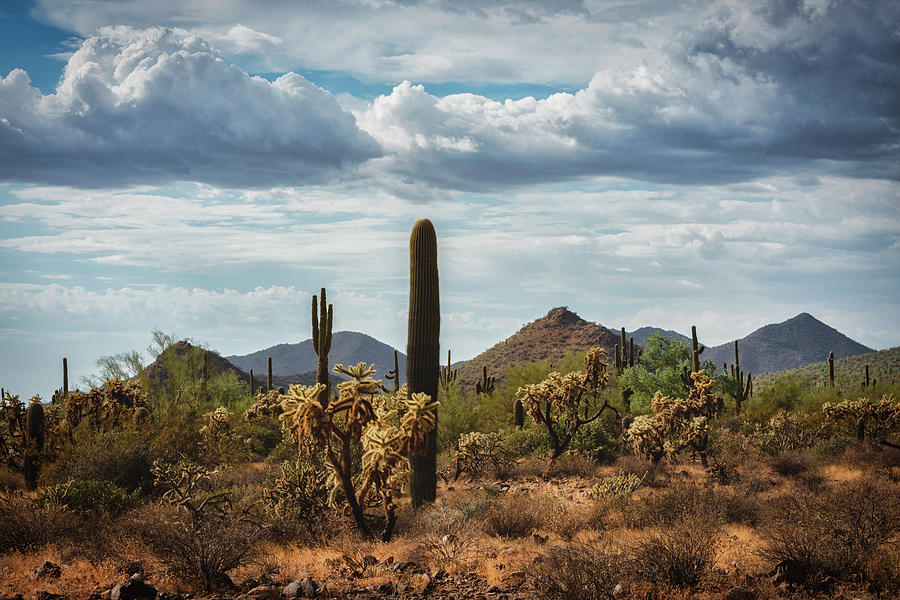 Saguaro Sunset Photograph - The Beauty Of The Desert  by Saija Lehtonen