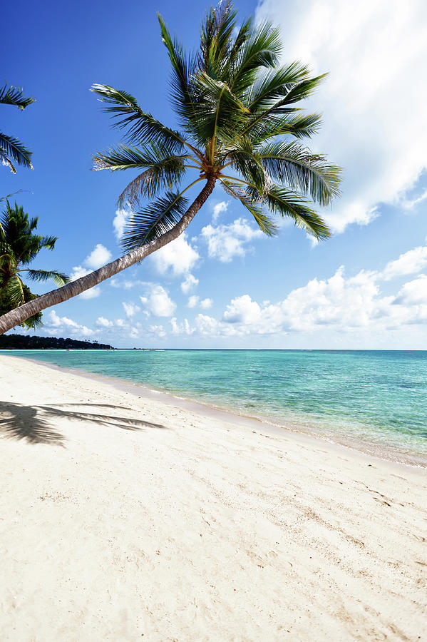Tropical Beach Photograph by Fredfroese