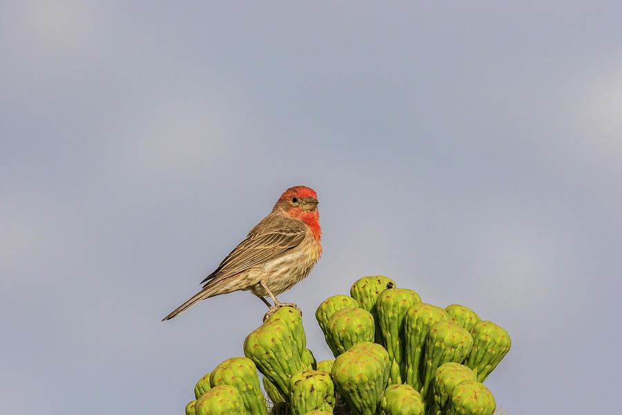 Arizona Photograph - Usa, Arizona, Sabino Canyon by Jaynes Gallery
