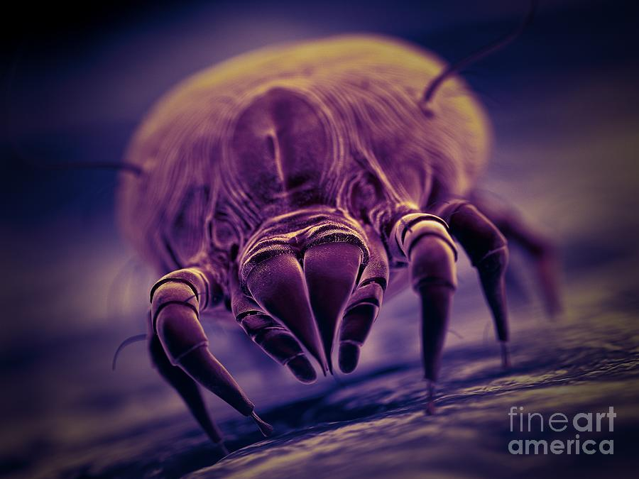 3d Photograph - Dust Mite 63 by Sebastian Kaulitzki/science Photo Library