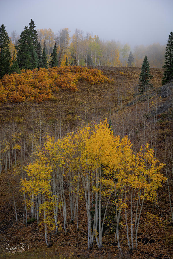 Cimarron Gold by Richard Raul Photography