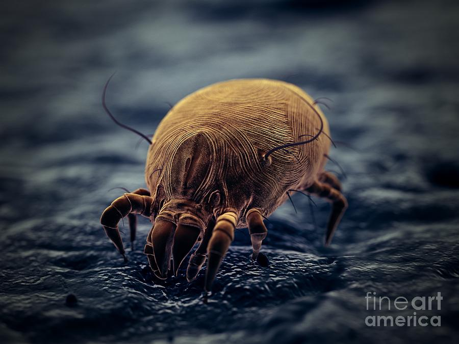 3d Photograph - Dust Mite by Sebastian Kaulitzki/science Photo Library