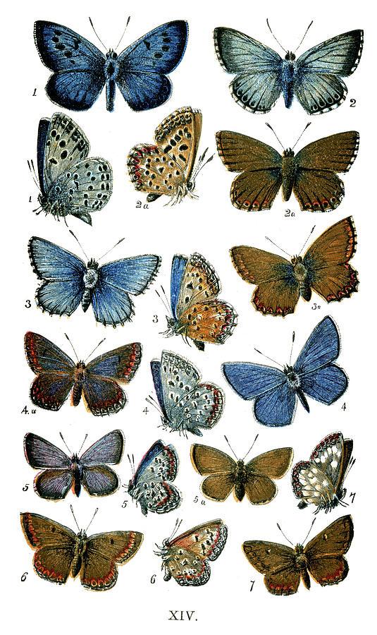 Butterflies Digital Art by Duncan1890