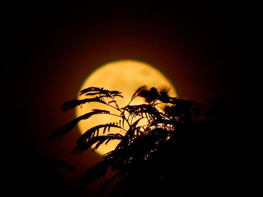 full moon rising by Virginia Kay White